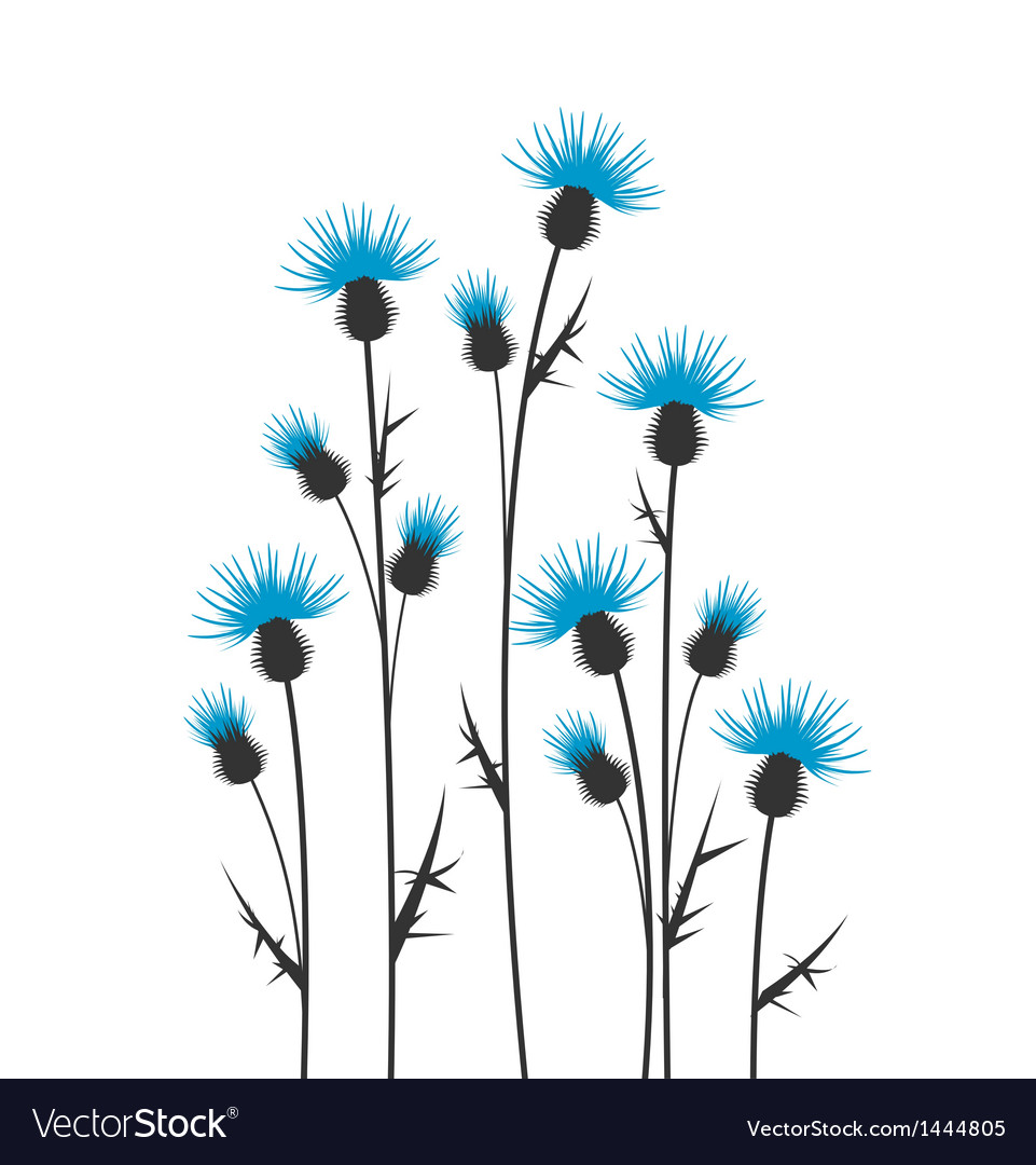 Thistles vector