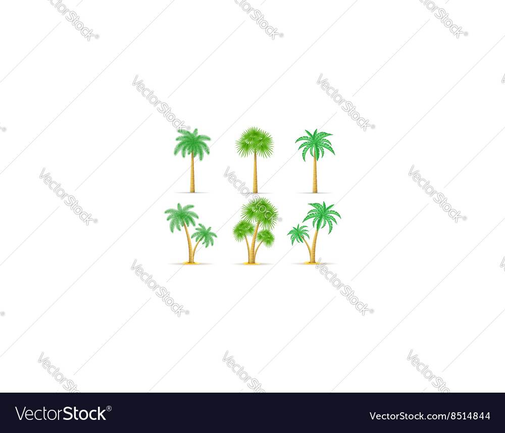 Palm tree 18 vector