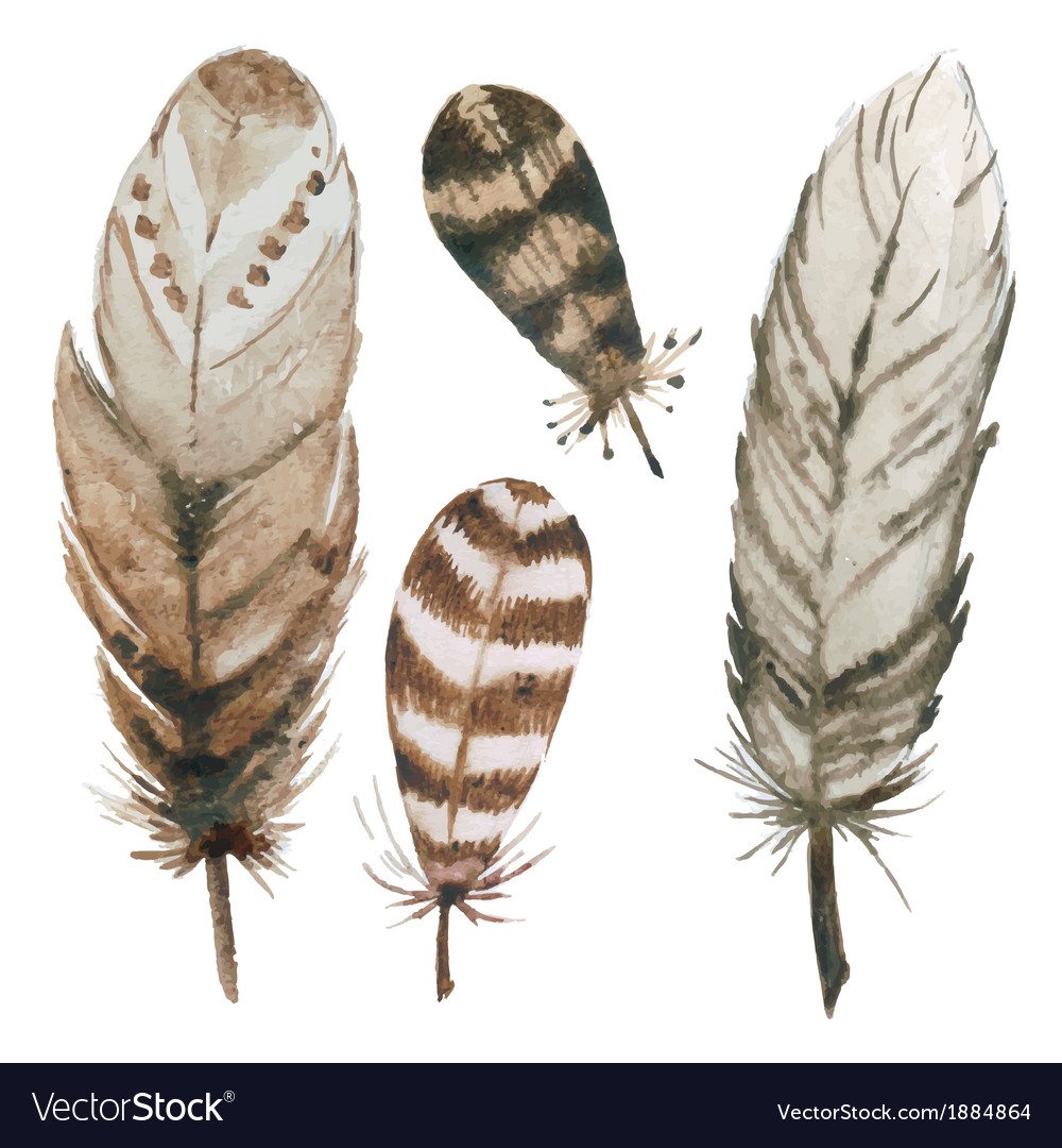 Watercolor feathers vector