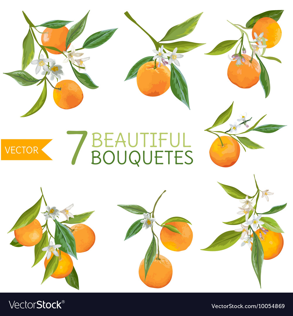 Vintage oranges flowers and leaves orange bouquete vector
