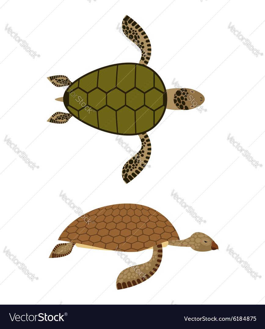 Set water turtle side view and top view deepsea vector