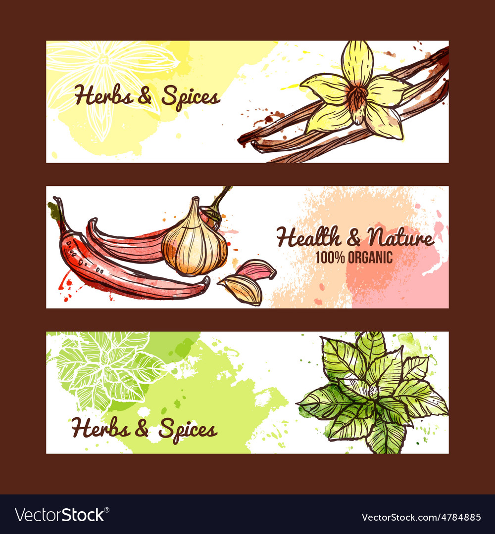 Herbs and spices banners vector
