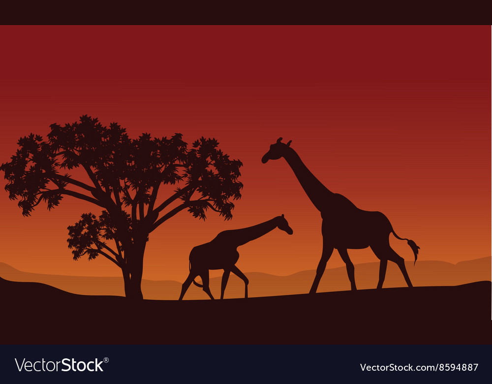 Two giraffe silhouette scenery vector