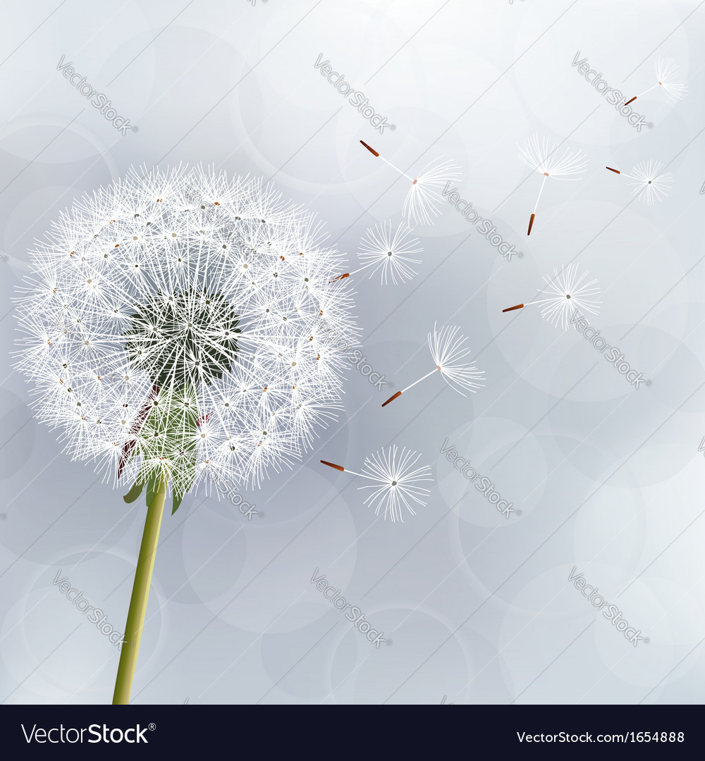 Floral trendy background with flower dandelion vector