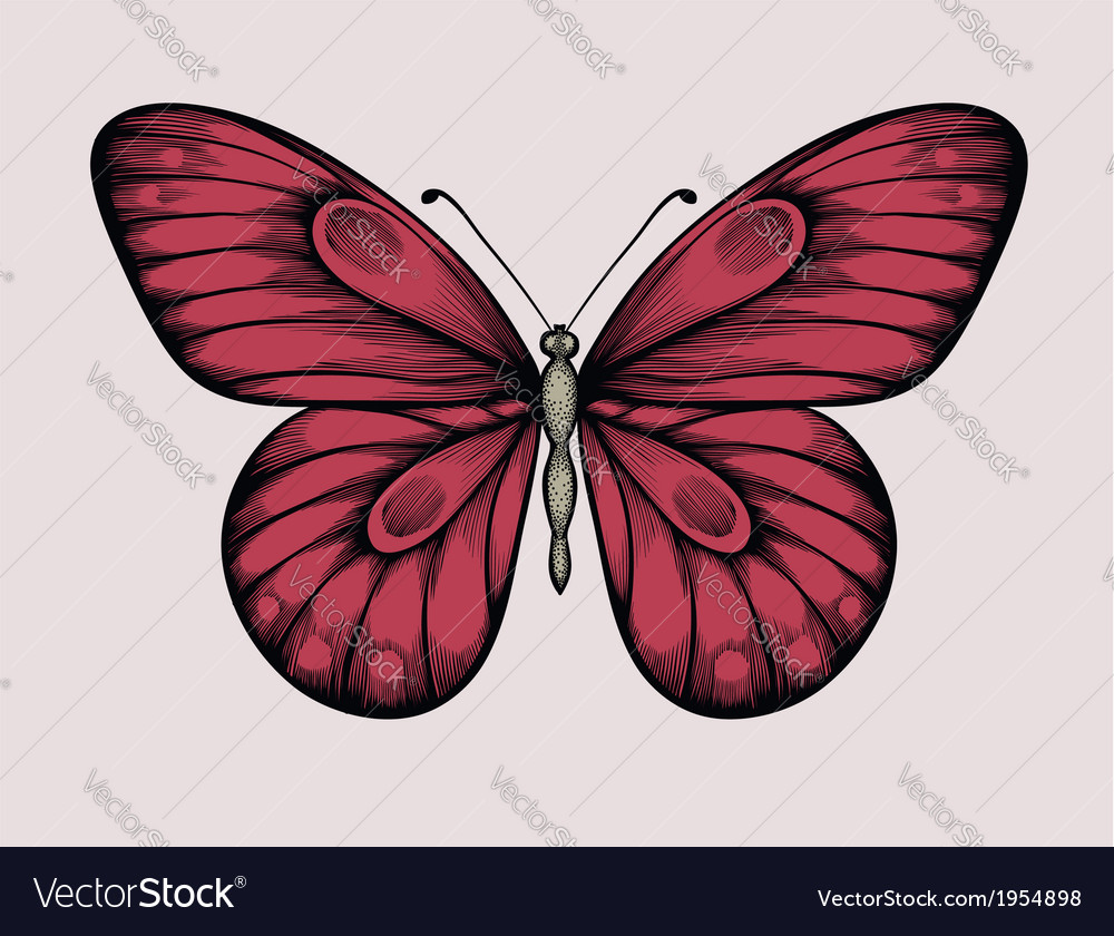 Butterfly in vintage style handdrawn contour line vector