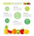 Organic infographic fresh fruits vector image