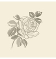 Hand drawing background old rose vector image vector image