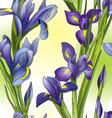 Blue irises vector image
