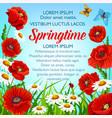 spring flowers poster springtime greetings vector image