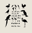 Birds Silhouettes vector image