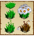 Stages of growth daisies planting and withering vector image
