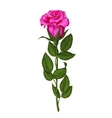 Rose isolated on a white background vector image