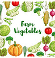 vegetables poster for organic farm food design vector image