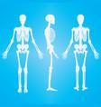 human skeleton silhouette white vector image