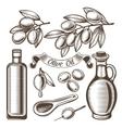 Vintage olive oil set vector image