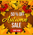 Autumn sale poster of fall season discount price vector image