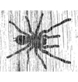 grunge tarantula vector image