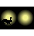 headlight rabbit vector image vector image