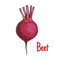 Beet tuber isolated sketch icon vector image