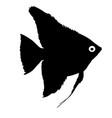 black silhouette of aquarium fish on white vector image