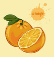 hand draw of orange vector image