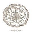 tree ring background saw cut tree trunk logo vector image
