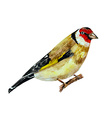 watercolor painting bird on branch vector image vector image