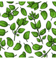 oregano seamless pattern isolated herb vector image