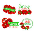 spring time greeting quotes flowers design vector image vector image