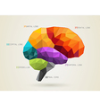 brainsection vector image