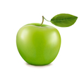 green apple vector image vector image