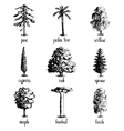 Set of hand drawn tree sketches vector image