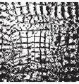 Skin Crocodile vector image