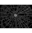 spider web resize