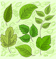 Set of green leaves hand-drawn for your design vector image