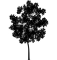 generic tree vector image vector image