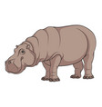 color of a hippopotamus vector image