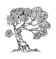 Gnarled tree with leaves vector image