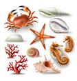 set of seashells coral crab vector image