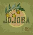 vintage jojoba plant design for organic cosmetics vector image