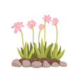 flowers growing in the flowerbed cartoon vector image