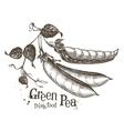 peas logo design template fresh vegetables vector image