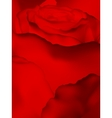 Close up of red rose with petals EPS 10 vector image