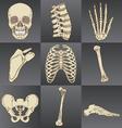 Human Bones vector image