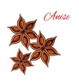 Anise spice isolated icon vector image