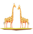 giraffes couple animals composition vector image
