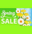 spring sale with daisies and dandelions and grass vector image