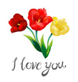 tulip flower design background I love you vector image
