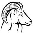 Mufflon head vector image
