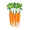 Bunch of carrotsPrint vector image